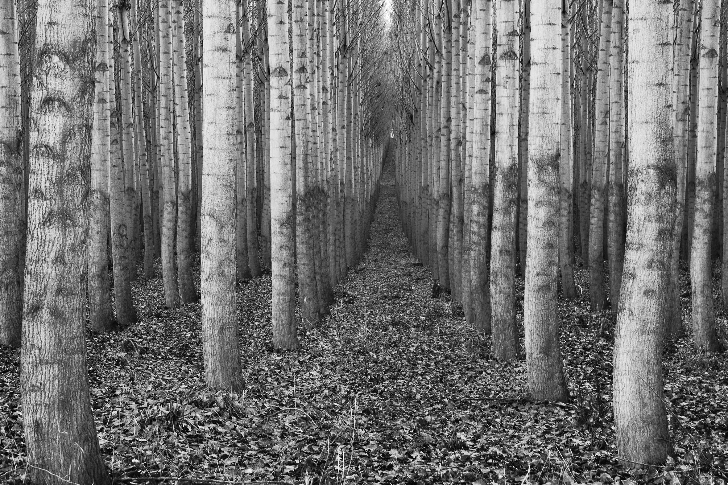 496 - Blackwood - Frisch