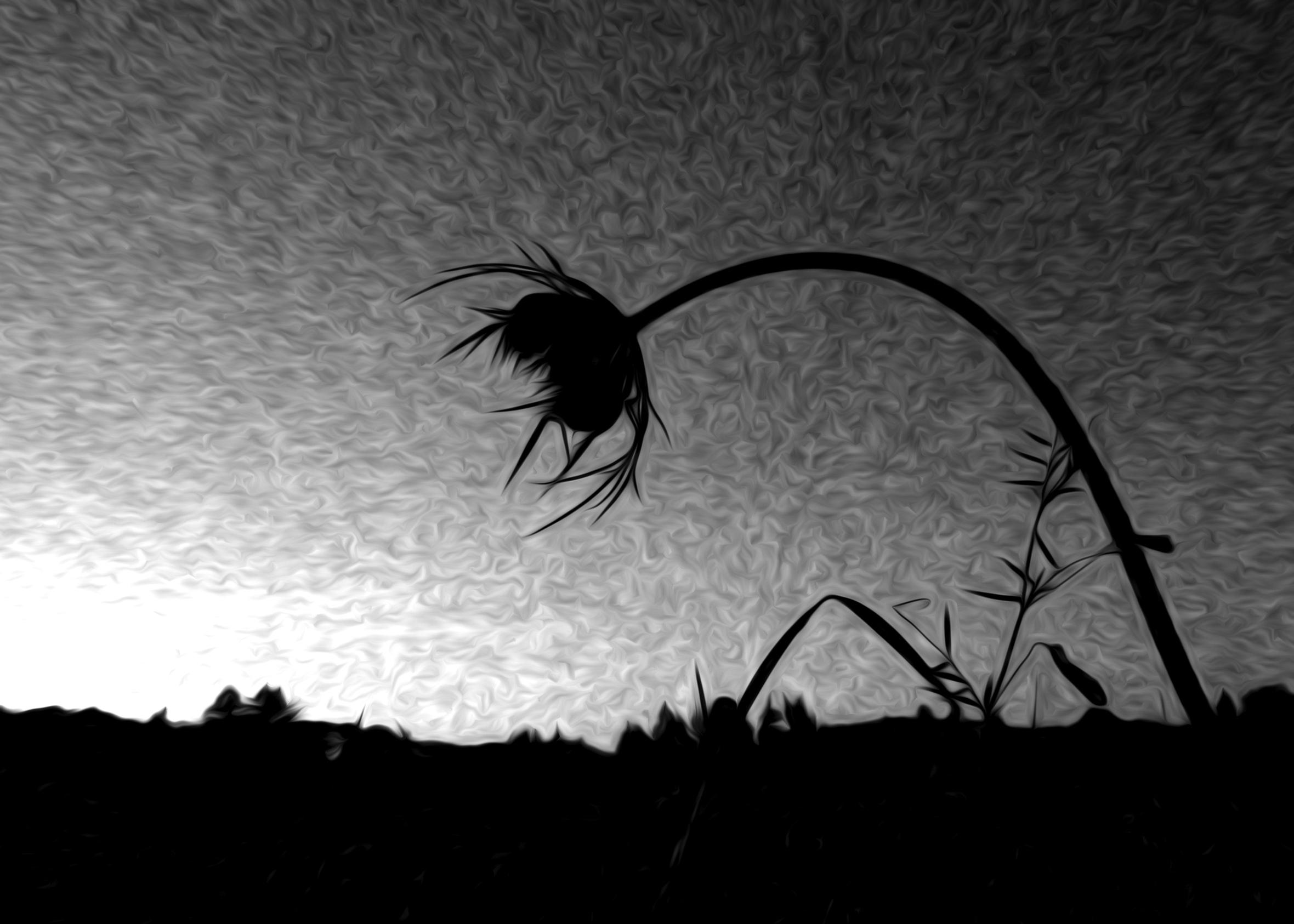 446 - Belknap - Thoreau