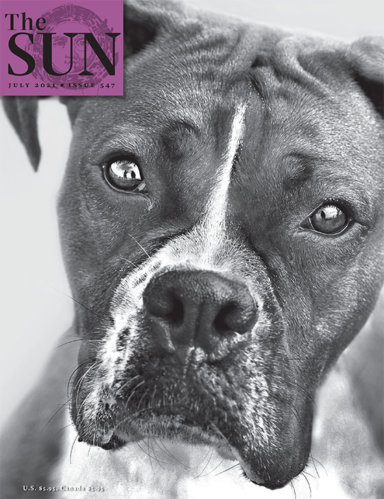 A close-up of a boxer dog staring directly into the camera.