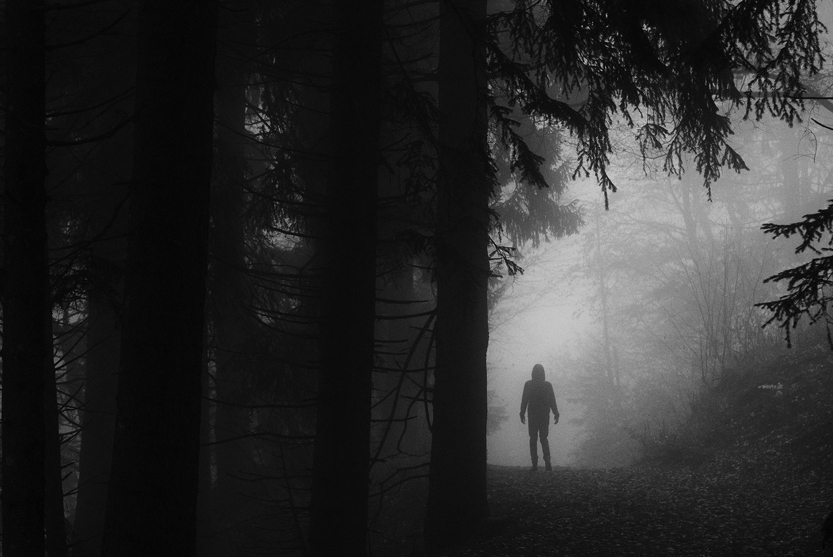 A silhouette of a person looks small against the large silhouettes and darkness of the forest surrounding them.