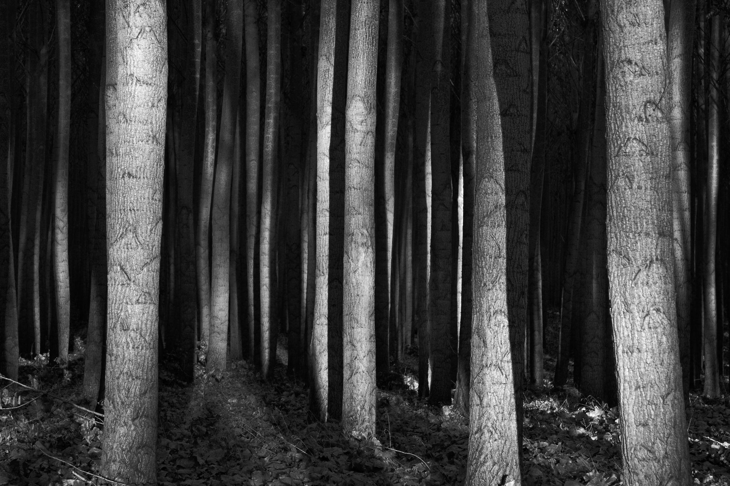 434 - Blackwood - Black